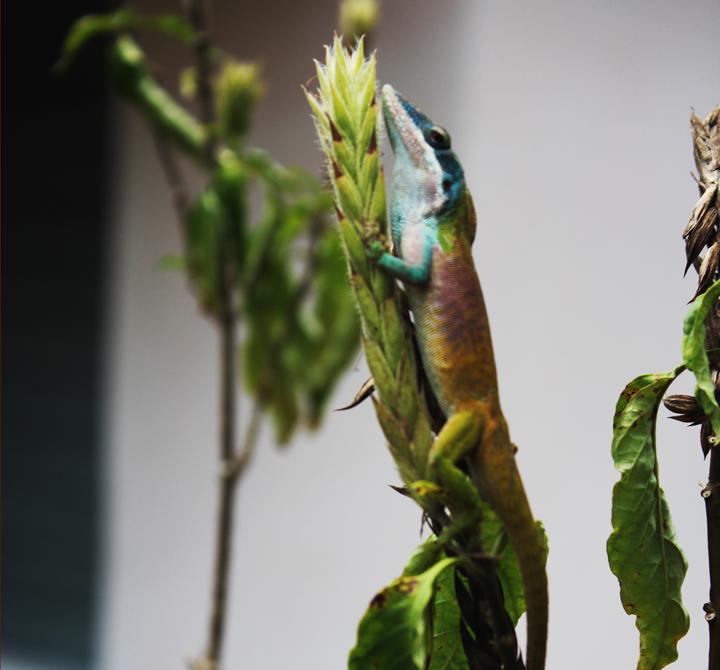 Cerebro Reptiliano – Resistencia y Reproduccción Como Objetivo